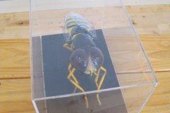 Biodiversity - Secret life of bees METNS Nov 2013