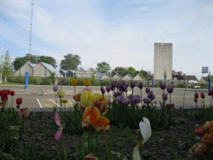 metns-summer-flowers-and-fun-may-2012-002