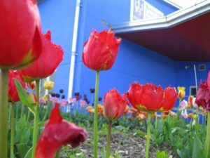 metns-summer-flowers-and-fun-may-2012-004